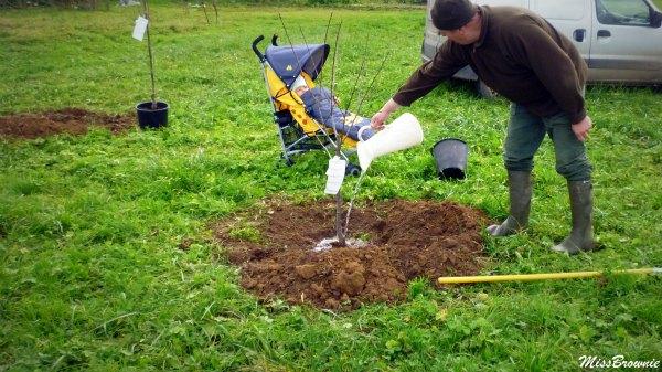 planter-un-prunier
