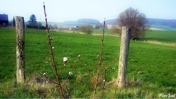arbre en fleur_picnik