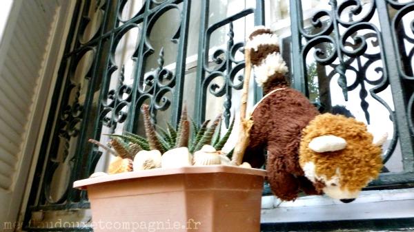 Les m saventures de ratou petit panda roux en tunisie - Un petit cochon pendu au plafond ...