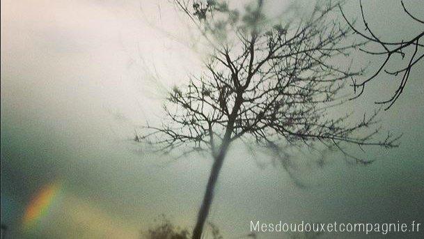 arbre nu et arc en ciel