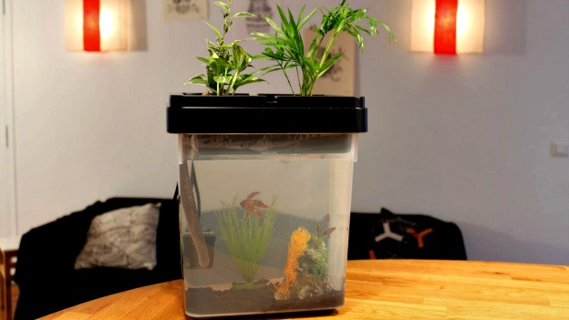 aquarium ozarium