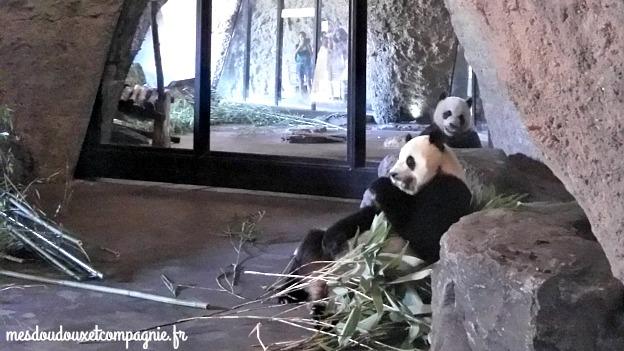 pandas pairi daiza