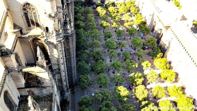 cour cathédrale séville