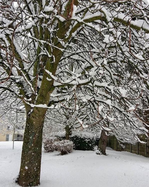 arbre enneigé - neige semaine 4 2019