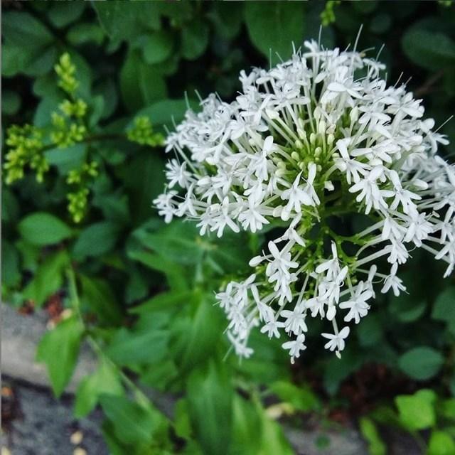 semaine 23 et 24 2019 fleurs des viles