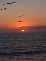 Birds into the Sunset at Hermosa Beach