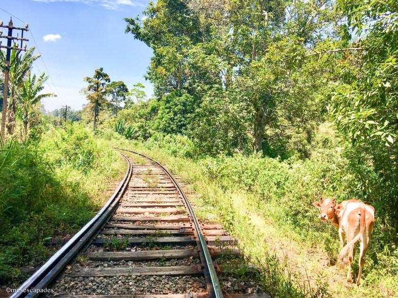 Découvrir le Sri Lanka à petits pas