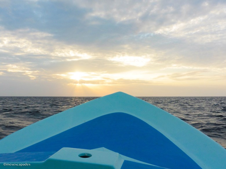Balade en mer pour voir des baleines et dauphins au Sri Lanka