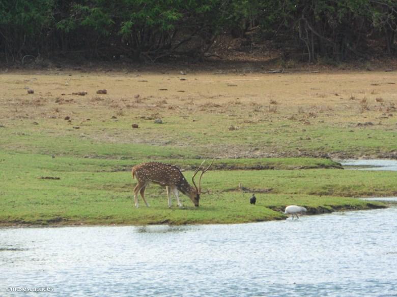 Le meilleur site de safari au Sri Lanka
