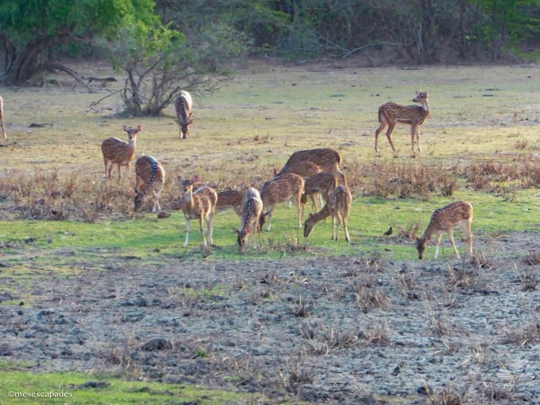 Safari de Kumana en août