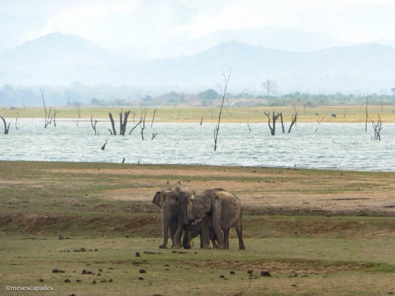 Safari découverte à Udawalawe