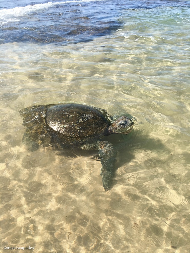 Où voir des tortues de mer au Sri Lanka ?