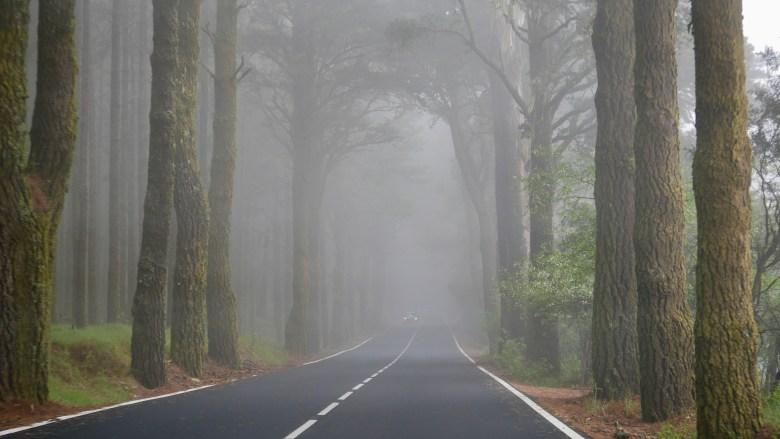 Passage par la Corona Forestal pour atteindre le parc du Teide