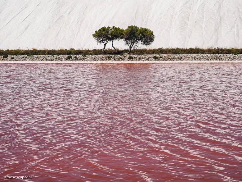 Les salins roses de Camargue