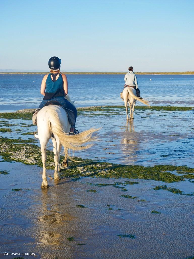 Balade à cheval avec La Palunette