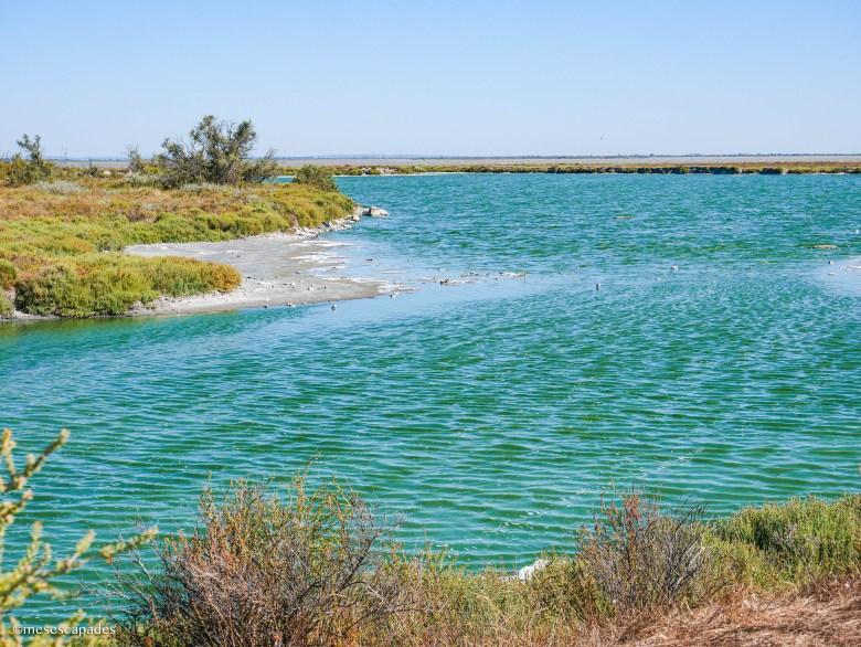 Une eau turquoise au bord de la réserve naturelle de Camargue