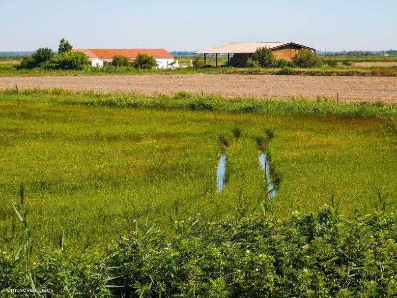 Les rizières de La Maison du Riz