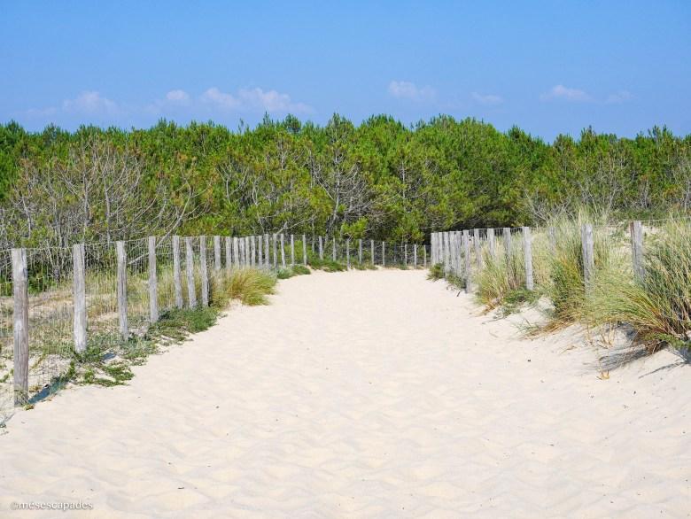 Sentier pour se rendre à la plage de la Pointe au Cap Ferret