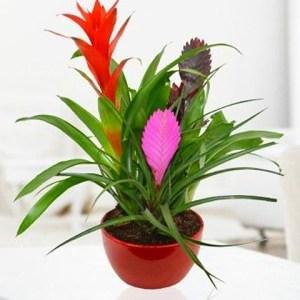 Plantes & Fleurs