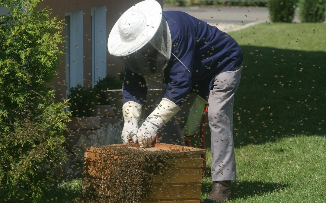 Les 8 conseils importants avant d'installer une ruche