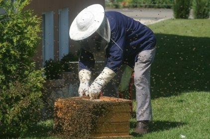 apiculteur abeilles calme