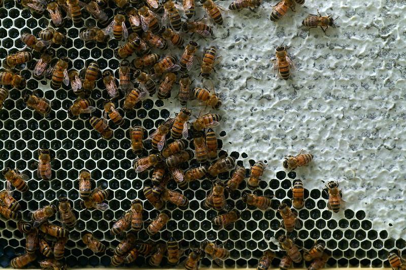 Cadre miel operculé