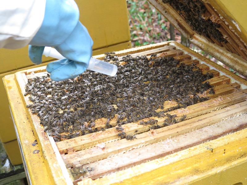 Interview #4 – Frédéric – Faire de l'apiculture amateur BIO