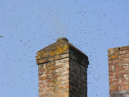 essaim abeilles vol