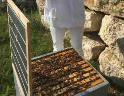 ruche Dadant abeilles