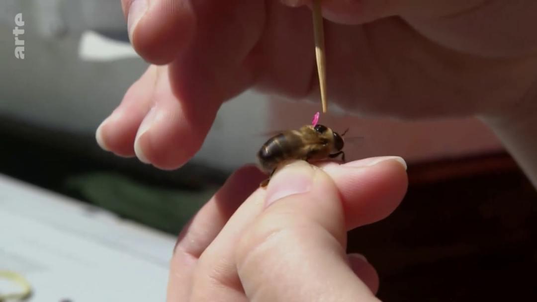 Pratique apiculture