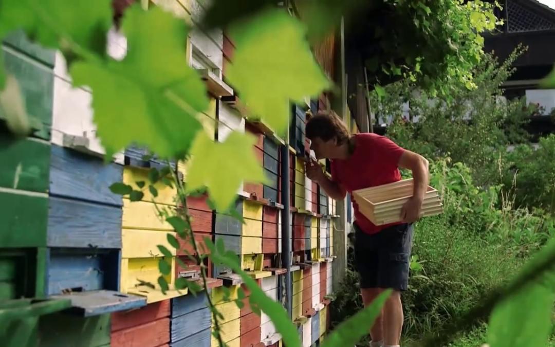 Marquer une reine pour suivre la généalogie – Episode 4 – Les maîtres des abeilles