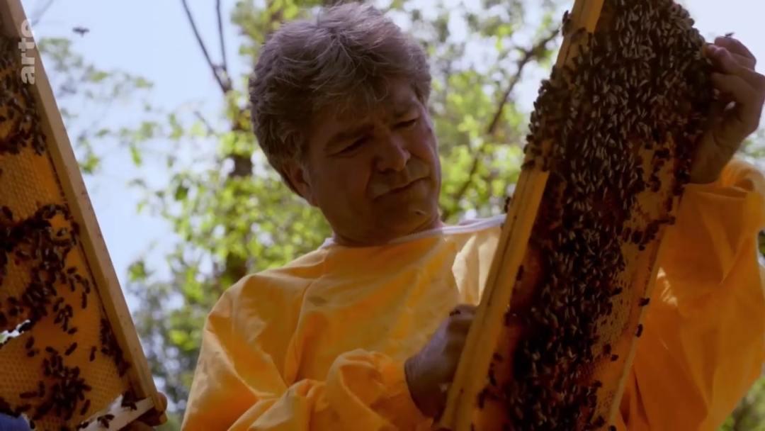 apiculture italie
