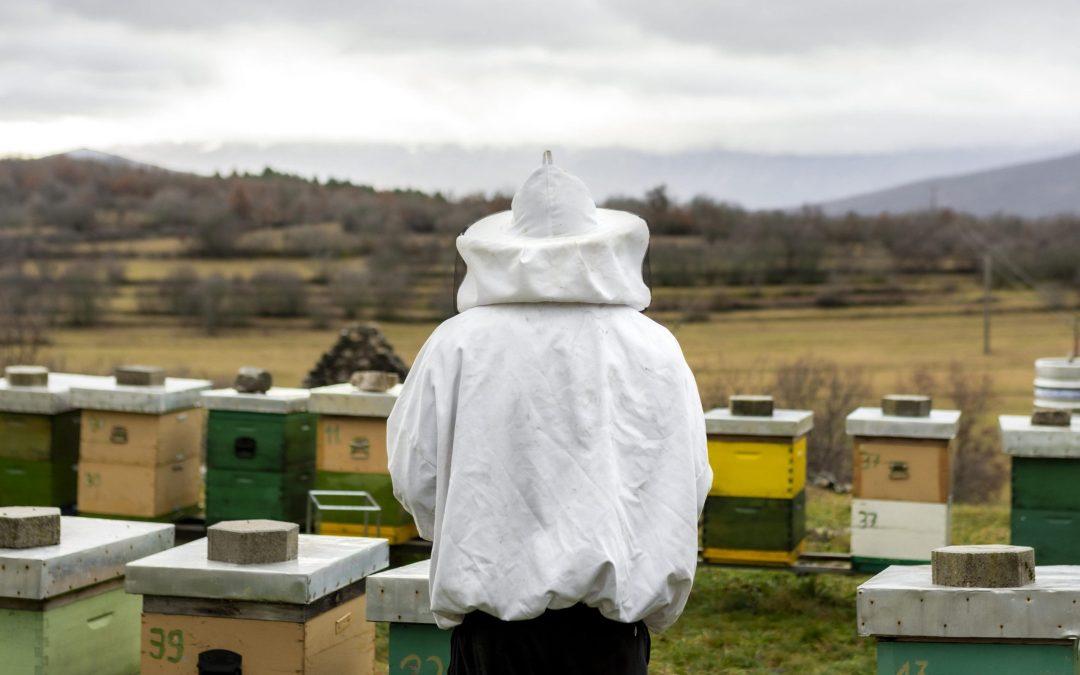 N'oubliez surtout pas la déclaration de vos ruches pour 2021 !