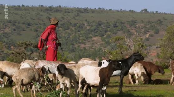 elevage chevres Afrique
