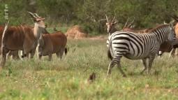 Grands mamiferes Afrique