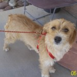 Featured Shelter Animals