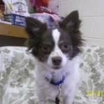 Featured Shelter Animals, August 1, 2014