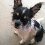 Featured Shelter Animals Sept. 19, 2014
