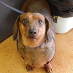 Featured Shelter Animals Dec. 19, 2014