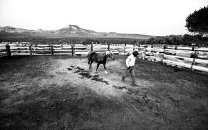 Ranch hand Nate Easterday walks his horse in a corral at Twin Springs Ranch as the sun rises on the Reveille Mountains. Twin Springs has operated along the Reveille Range since the late 1860s -- nearly as long as Nevada has been a state. PHOTO BY JEFF SCHEID