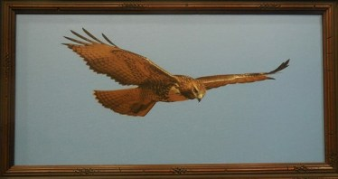 Walt Alder captured a hawk's Flight of Fancy in his White Ribbon photograph, Floating on the Wind. Photo by Linda Faas.