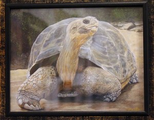 ": The ""Galapagos Tortoise"" by Jeffrey Oldham is a Giclee' print and looks so real you might expect it to walk right out of the frame. In Giclee' printing no screen or other mechanical devices are used and therefore there is no visible dot screen pattern. The image has all the tonalities and hues of an original painting. Photo by Teri Nehrenz"