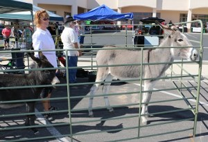 "Peaceful Valley Donkey Rescue attended the first Honoring the Ageless event sponsored by Mesquite Local News on Oct. 7, showing off two of their best, Pepper and Lunar. Lunar has been a resident of the Scenic Satellite of PVDR since she was born, being the first baby born at the site. ""We had a great response from the crowd and had some fosters take place,"" said co-director Joan Dunkle. Photo by Stephanie Clark."
