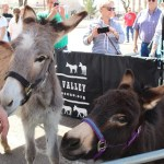 Record crowds support donkey rescue