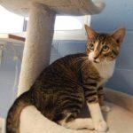 Mesquite Animal Shelter Pet Listing  June 2, 2017