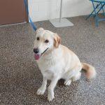 Mesquite Animal Shelter Pet Listing July 14, 2017