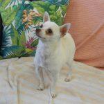 Mesquite Animal Shelter Pet Listing August 18, 2017