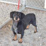 Mesquite Animal Shelter Pet Listing October 21, 2017