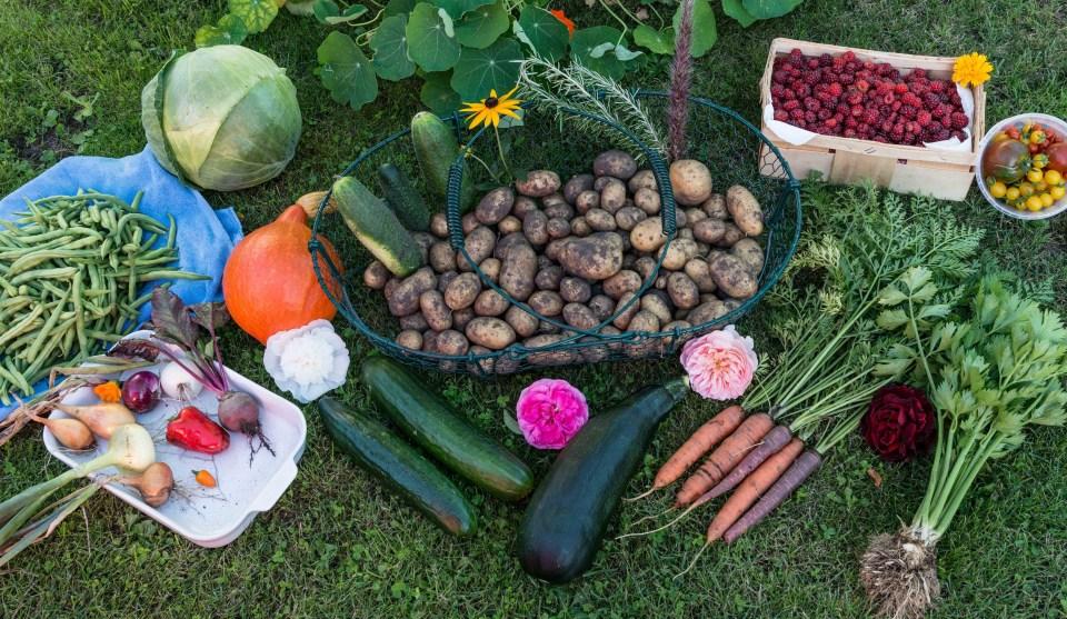 Les compléments alimentaires (2)