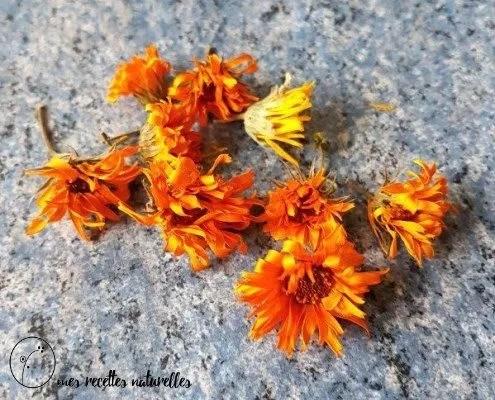fleur de souci séchée